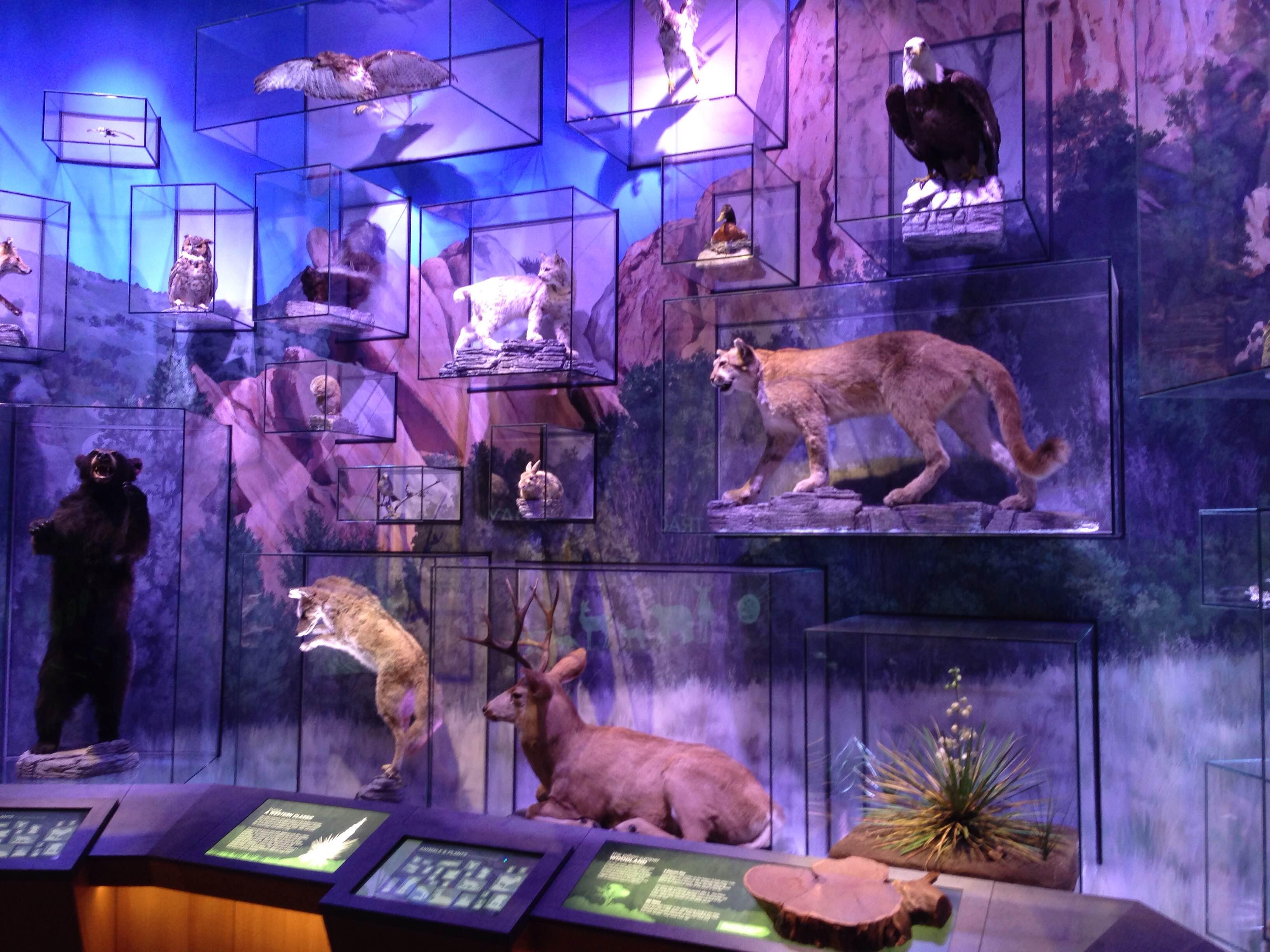 Garden of the Gods Visitor Center Animals