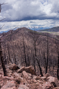 Blodgett Peak fire damage