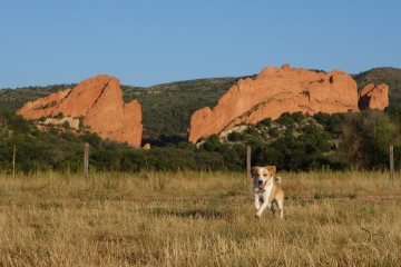 Dog off leash at Garden of the Gods