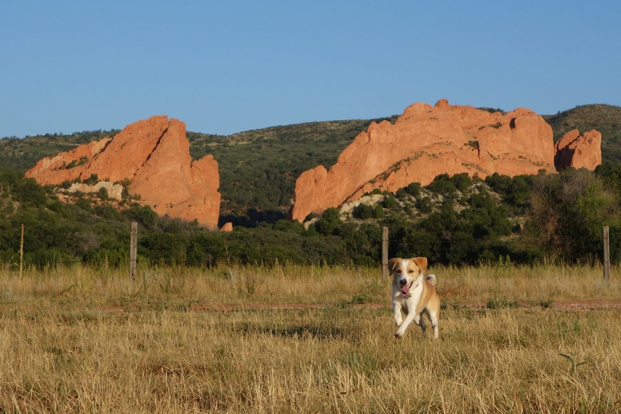 Image result for garden of the gods off leash dog area