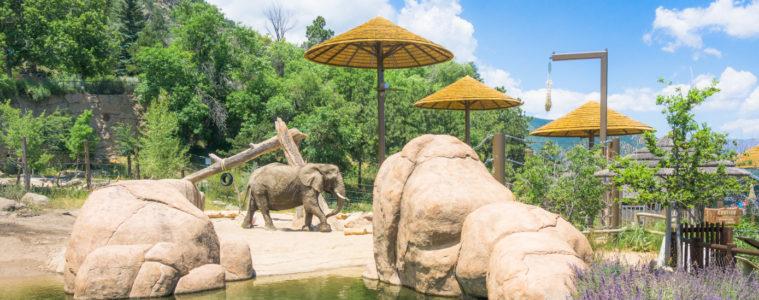 cheyenne mountain zoo elephant