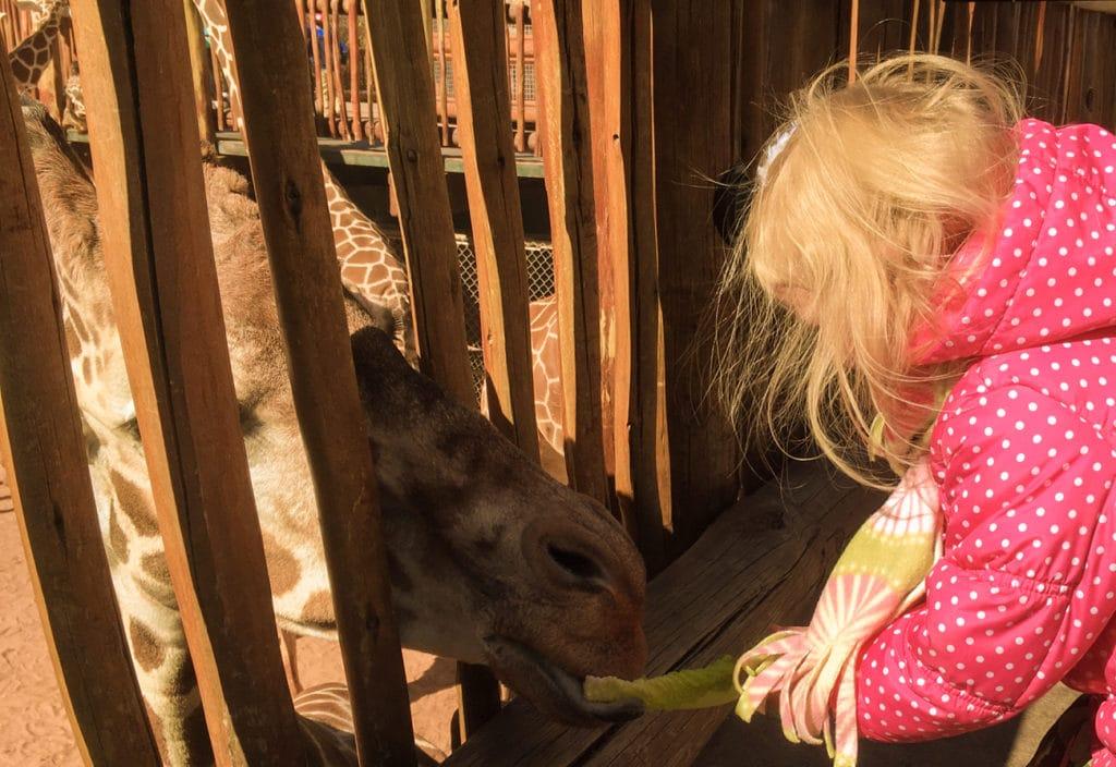 cheyenne mountain zoo feeding giraffe