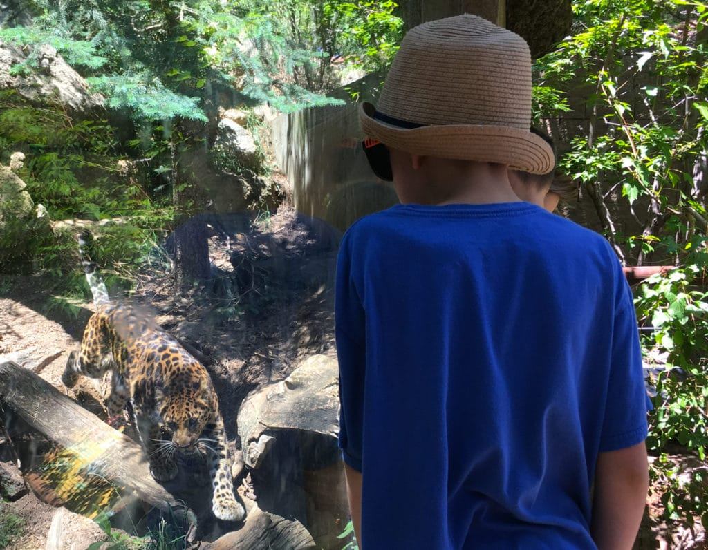 cheyenne mountain zoo leopard
