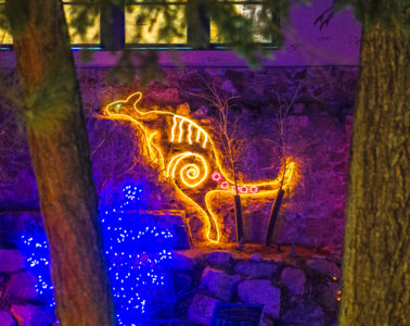 Electric Safari Cheyenne Mountain Zoo — Australian Walkabout