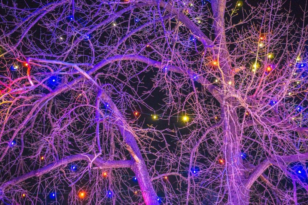Electric Safari Christmas lights
